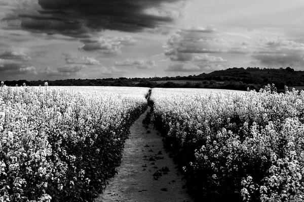 Long Path of Dreams