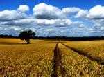 Summer Harvest IV