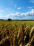 Summer Harvest V