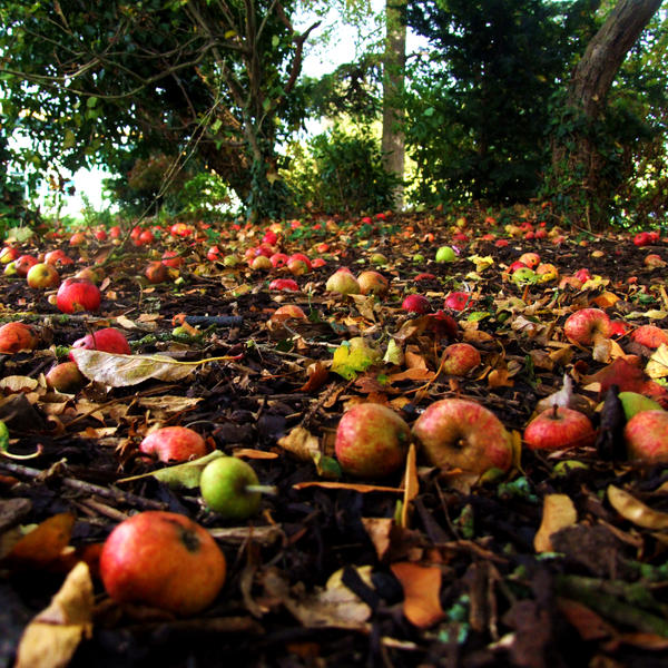 English Apples II by Teakster