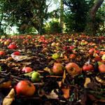 English Apples II