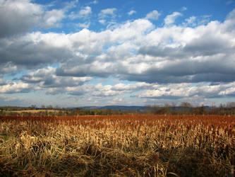 Amber Waves of Grain by mahsunny