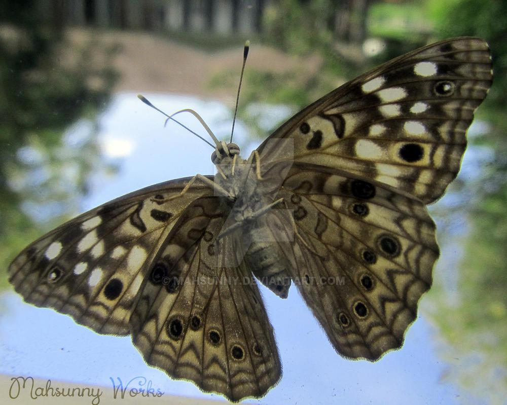 Moth by mahsunny