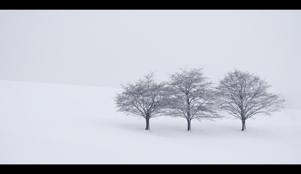 Three Trees by mARTinimal