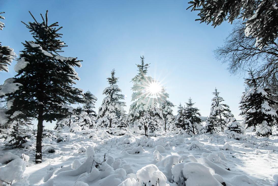 winter by mARTinimal
