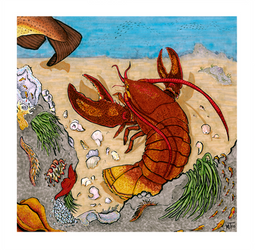 Lobster by Birds-Underwater