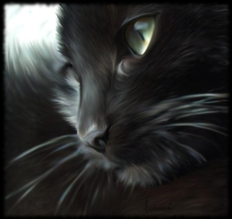 Cat by CoraxCorvidae