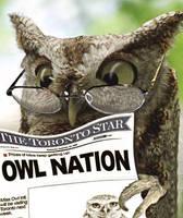 Bad vision Owl by Karkau
