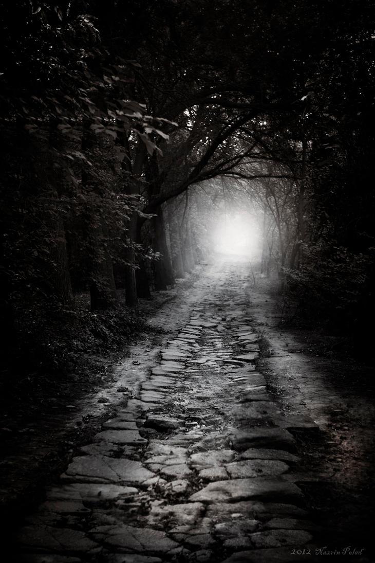 Dark forest by Nazrin-Polad