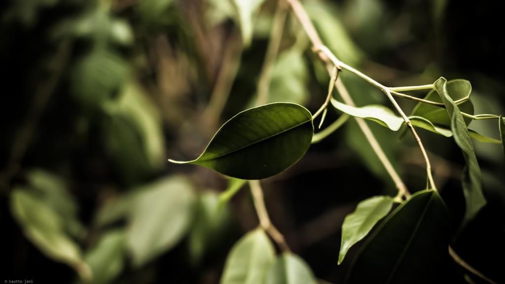 Leaves by Maizzi