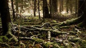 Autumn roots by Maizzi