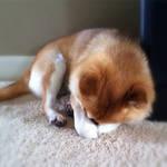 Sleepy Sam by MorgansMutations