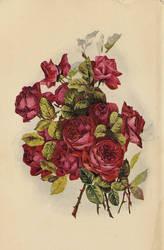 Rose leaves 2 by jinifur