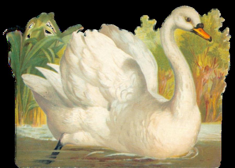 Vintage swan clipart by jinifur on DeviantArt