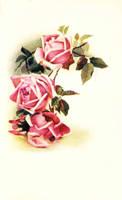 More vintage roses...