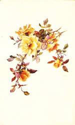 Yellow vintage rose by jinifur
