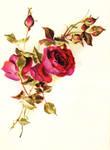 Vintage roses red