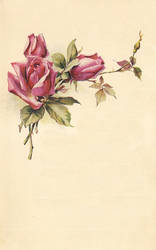 rose leaves 6 by jinifur