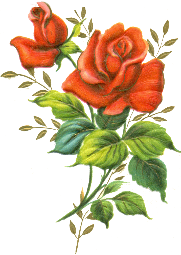 Red Rose Png By Jinifur