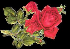 Rose Red by jinifur