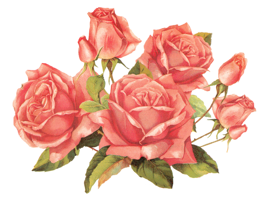 Clip Art, Exotic Flowers And Pink Roses