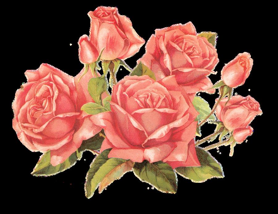 http://fc07.deviantart.net/fs71/i/2011/018/e/c/rose_pink_by_jinifur-d37hnap.png