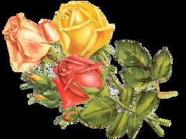 Rose yellow by jinifur