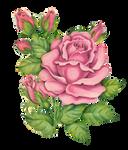 Rosey clip