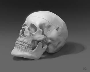 Skull study - videoprocess by kresbicky