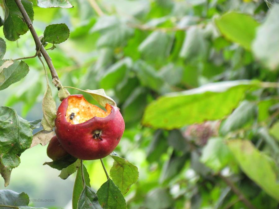 Apple by mprada69
