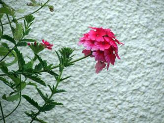 Flower by mprada69