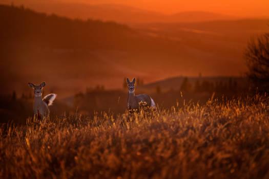 Deer Sunset