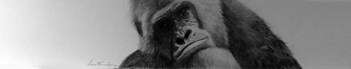 Gorila by valeriafernand