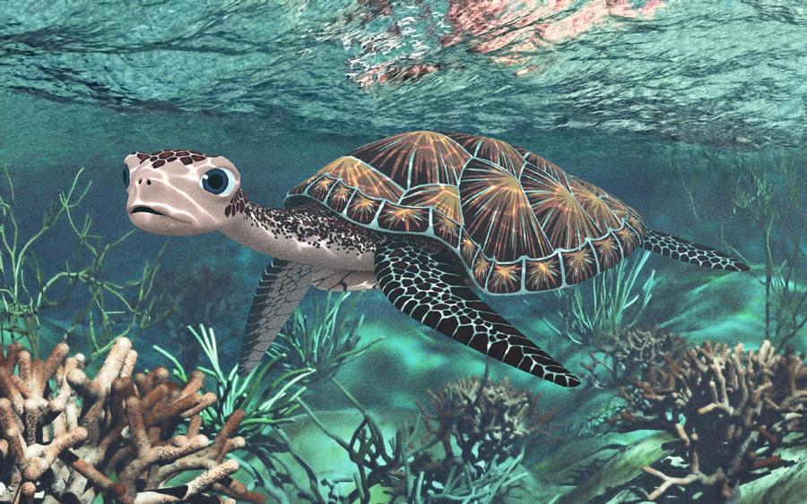Turtle 3d by ren-ort