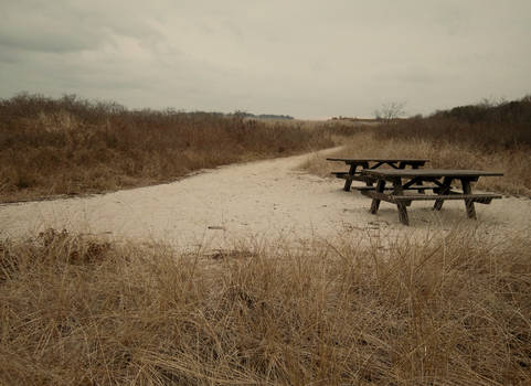 Desolate Paradise