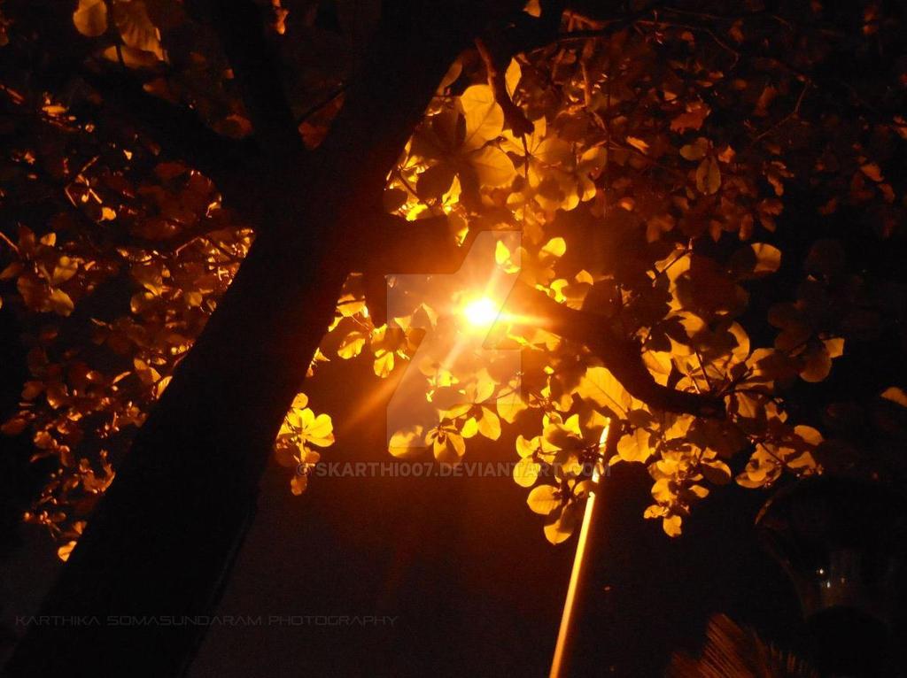almond tree by skarthi007