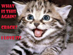 cats picture funny