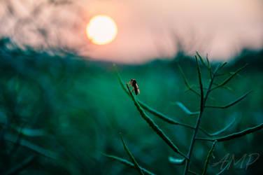 Watching the SunSet. by darkHunTer2009