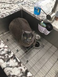 Theres a cat in my sink!