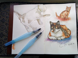 Cat sketches by Chayt