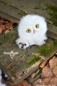 Owl Sowush 1