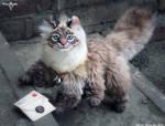Amri - cats postman