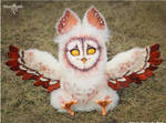Long-eared Barn Owl