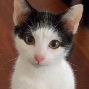 geaspirito's Profile Picture