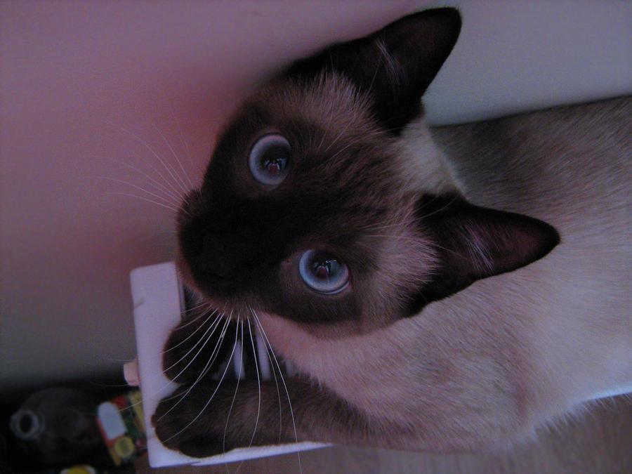 http://fc17.deviantart.com/fs39/i/2008/343/8/a/Cat_nr__2_by_AzraelAngel.jpg