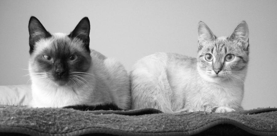 http://fc32.deviantart.com/fs38/i/2008/347/2/1/My_cats_by_AzraelAngel.jpg