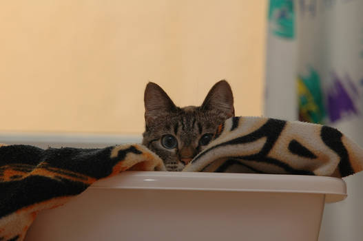 In her sleeping bowl