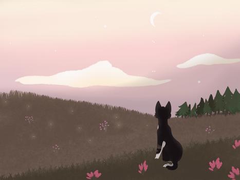 Twilight Bliss