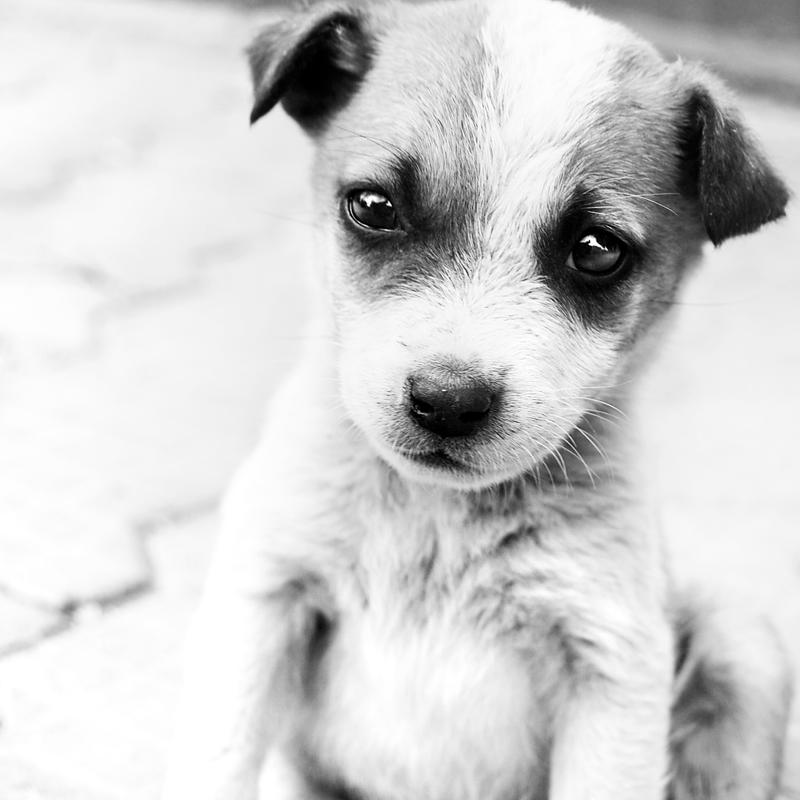 Portrait of sad eyes by MarinStefan