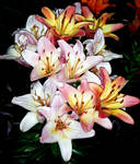 Bunch of Pale Lilies by Sighz-no-name